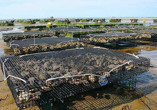 ホタテの養殖場
