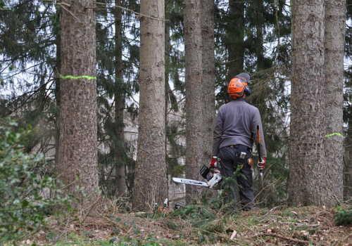 中分類02林業のイメージ