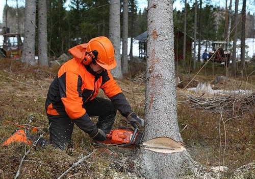 伐木等業務従事者特別教育イメージ切り倒し
