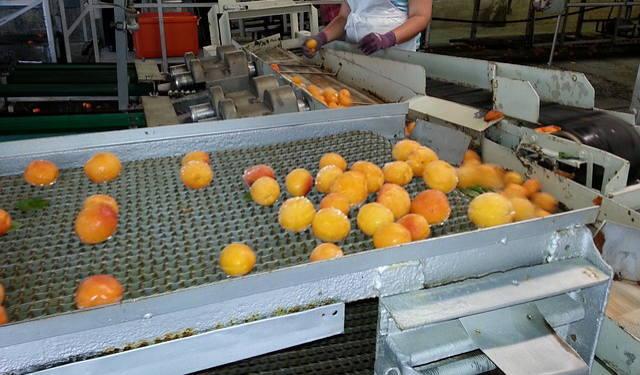中分類09の食料品製造業缶詰工場