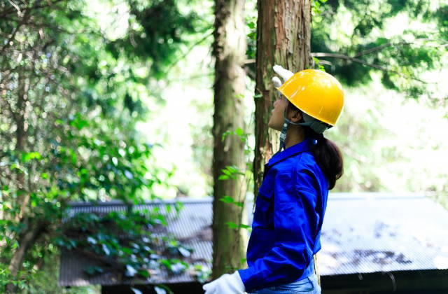 職業分類女性林業